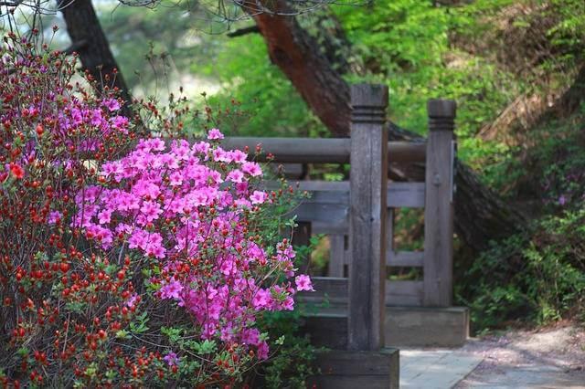 azalea pianta velenosa cane