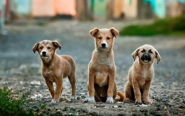 Tre cuccioli in strada che guardano