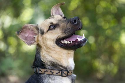 Cane che guarda felice