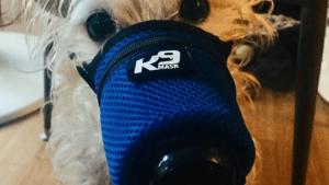 Cane con maschera contro coronavirus 2019-nCov