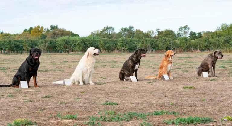 Cani seduti in una sessione di educazione cinofila