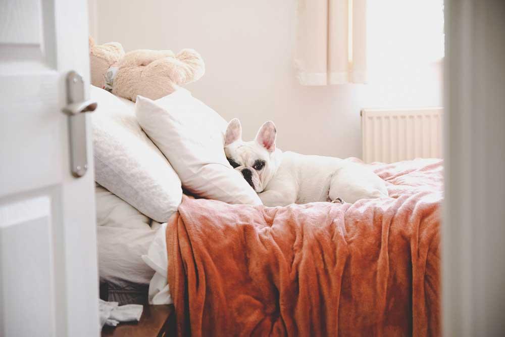 Cane stressato sul letto