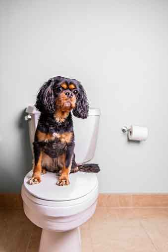 cane seduto su un water